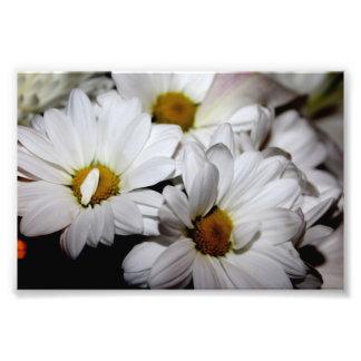 Impressão da foto das flores brancas