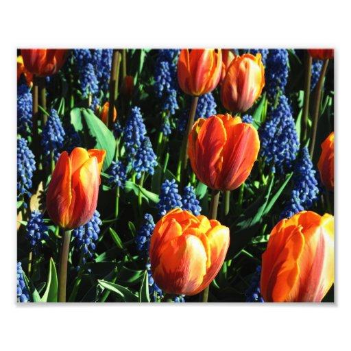 Impressão da foto das tulipas 12