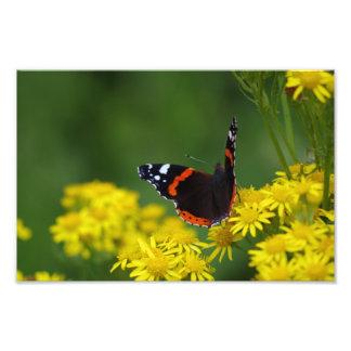 Impressão da foto do almirante vermelho borboleta