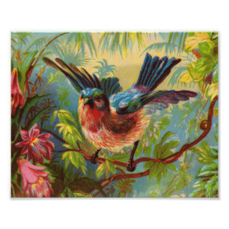Impressão da foto do Bluebird do verão