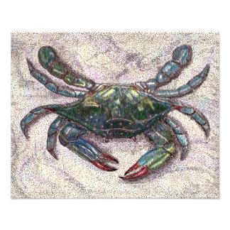 Impressão da foto do caranguejo azul de baía de