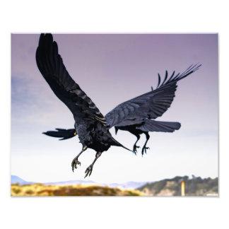 Impressão da foto do corvo em vôo junto impressão de foto