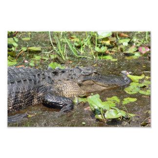 Impressão da foto do jacaré do parque do pântano d