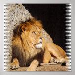 Impressão da foto do leão