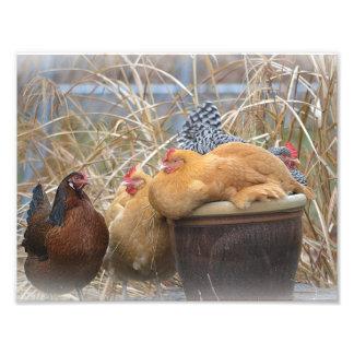 Impressão da foto do partido de galinha impressão de foto