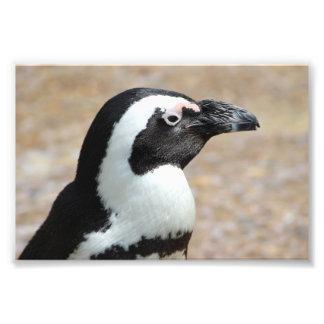 Impressão da foto do perfil do pinguim impressão de foto