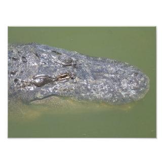 Impressão da foto dos animais selvagens do jacaré