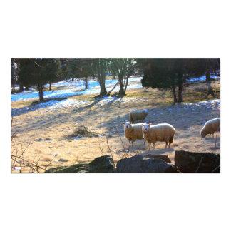 Impressão da foto dos carneiros