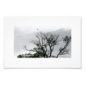 Impressão da foto dos jardins de Powerscourt da si