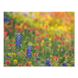 Impressão da foto dos Wildflowers do primavera Impressão De Foto
