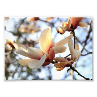 Impressão da fotografia da flor