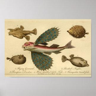 Impressão da história natural de peixes de vôo do