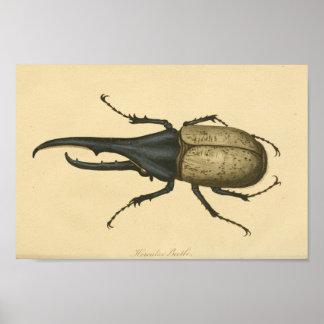Impressão da história natural do besouro de