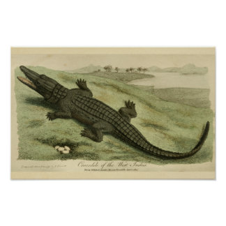 Impressão da história natural do crocodilo das