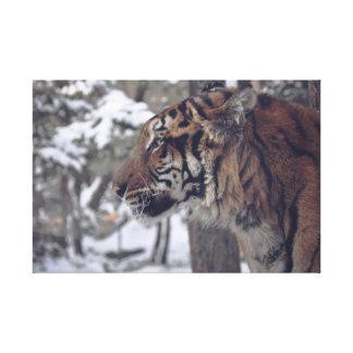 Impressão da parede das canvas do tigre