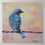 Impressão das belas artes do Bluebird da montanha