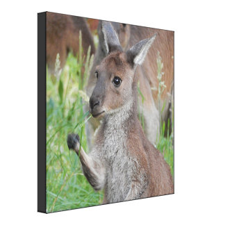 Impressão das canvas - canguru bonito Joey