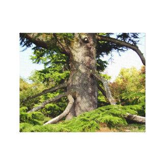 Impressão das canvas da árvore de Cedro--Líbano