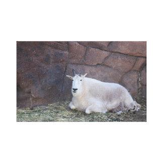 Impressão das canvas da cabra de montanha