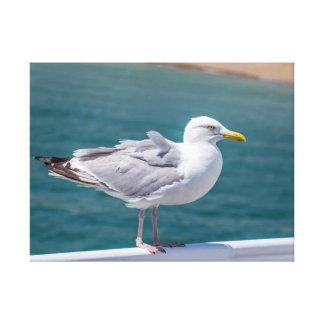 Impressão das canvas da gaivota