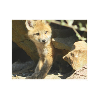 impressão das canvas da raposa, decoração foxy,