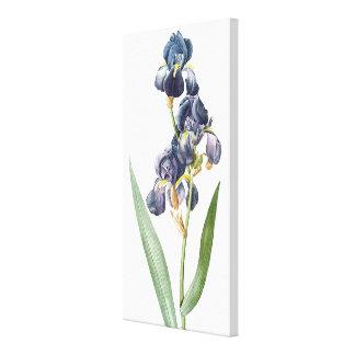 Impressão das canvas das flores da íris de Redoute