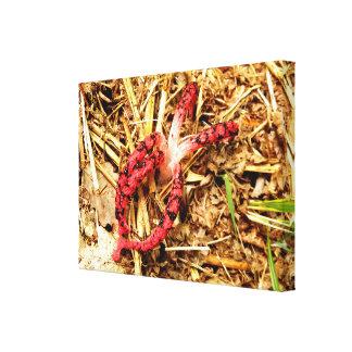 Impressão das canvas de Stinkhorn do polvo