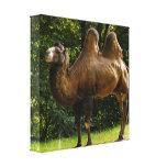 Impressão das canvas do camelo dois Humped Impressão Em Canvas