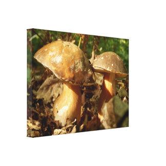 Impressão das canvas do cogumelo do bolo da moeda