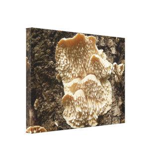 Impressão das canvas do cogumelo do cirrhatum de
