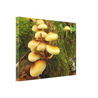 Impressão das canvas do cogumelo do fasciculare de