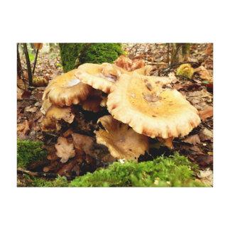 Impressão das canvas do cogumelo do giganteus de