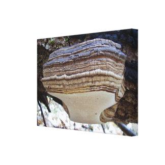 Impressão das canvas do cogumelo do igniarius de