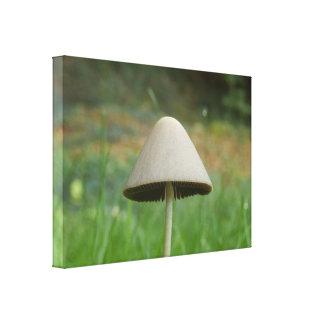 Impressão das canvas do cogumelo do rickenii de