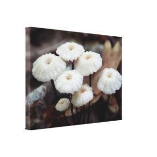 Impressão das canvas do cogumelo do rotula do