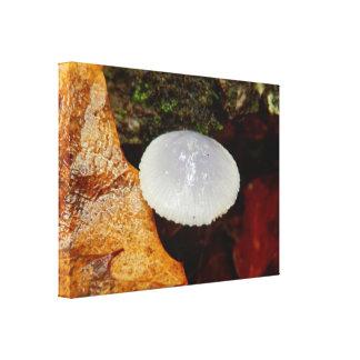 Impressão das canvas do cogumelo dos stylobates de