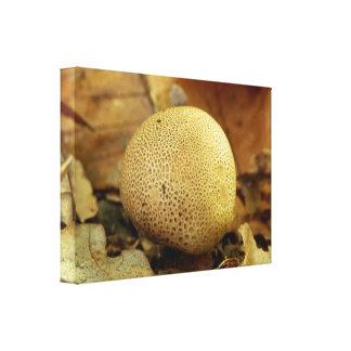 Impressão das canvas do fungo de Earthball do