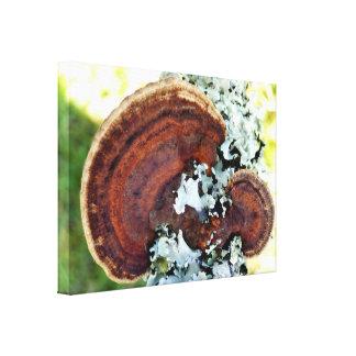 Impressão das canvas do fungo de Mazegill do