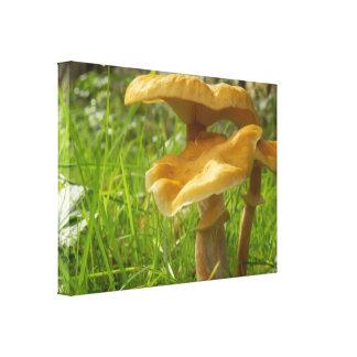 Impressão das canvas do fungo de mel