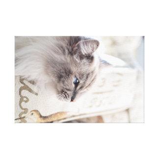 Impressão das canvas do gato de Millie Ragdoll