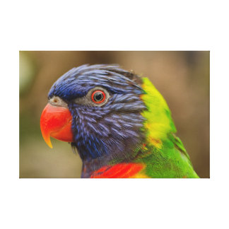 Impressão das canvas do pássaro da natureza