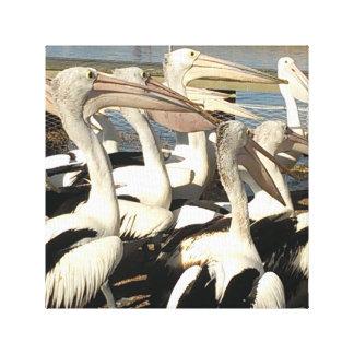 Impressão das canvas do pelicano
