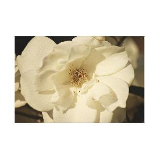 Impressão das canvas do rosa branco