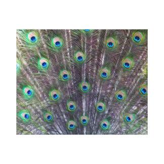 Impressão das canvas do Trance de um pavão