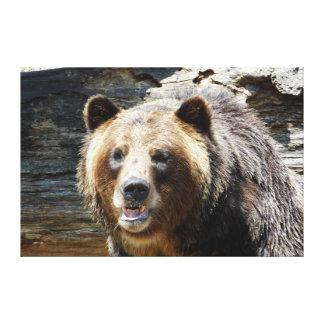 Impressão das canvas do urso de urso