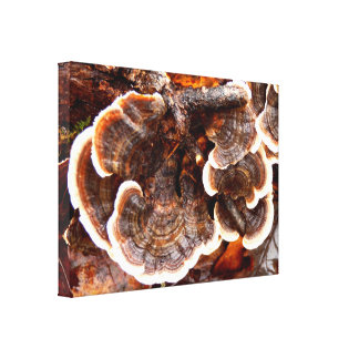 Impressão das canvas dos fungos das caudas de