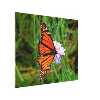 Impressão das canvas - flor de borboleta