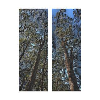 Impressão das canvas - florestas