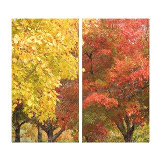 Impressão das canvas - glória do outono
