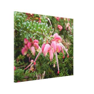 Impressão das canvas - Grevillia cor-de-rosa